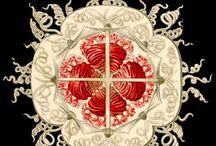 """Art I Ernst Haeckel / """"Wie man zum Schluß resigniert, darauf kommt es an.""""  Ernst Haeckel (1834 - 1919),"""