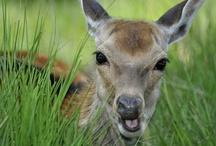 I hate the deer garden