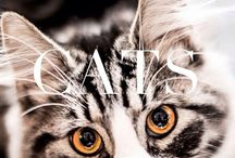 Cats / Lovely cats ❤️