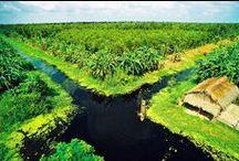 U Minh Urwald - Die Schönheit der Natur Vietnams / Möchten Sie eine andere Seite von unseren Land entdecken Dann ist ein Besuch zum U Minh Urwald unsere Empfehlung für Sie. Dabei hinterlässt die primitive Natur bei Ihnen einen einzigartigen Eindruck.  Bei Ihrem Besuch des U Minh Urwaldes im Mekong-Delta können Sie die frische Atmosphäre und den Freiraum genießen. Darüber hinaus haben Sie Chance, alle wilde Tierarten zu betrachten.