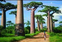 Die schönste Baum-Straßen auf der Welt / Haben Sie eine Chance, eine der schönsten Baum-Straßen auf der Welt? Diese Straßen verzeichnet die Harmonie zwischen der Natur und Humanität.