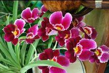 Da Lat- Stadt der Blumenwelt / Da Lat liegt im Lam Dong Plateau, im Süden Vietnams. Da Lat ist berühmt für die schöne Blumenwelt. Wenn Sie dorthin reisen, haben Sie eine Chance, Hunderte Blumenarten zu entdecken und zu genießen