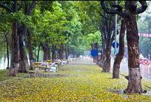 schöne Straße in Hanoi / Hanoi- die Hauptstadt von Vietnam liegt im Norden des Landes. Diese Stadt bietet man nicht nur die berühmten Sehenswürdigkeiten wie Ho Chi Minh Mausoleum, Literatur Tempel, West See, Bat TRang Keramikdorf usw. sondern auch viele schöne Straßen an, die   locken viele ausländische Touristen an+++ Located in the North, Hanoi, the capital of Vietnam offers several wonderful Streets besides many Destinations such as Ho Chi Minh Mausoleum, Literature Temple, West Lake,...