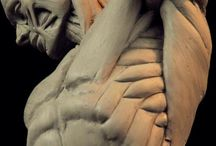 Human ANATOMY / anatomical references