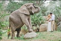 A South African Wedding