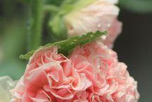 Flowers / Fiori bellissimi fiori