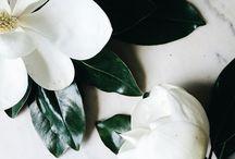 ArtSophia Flower / Beautiful flower arrangements