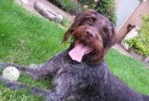 Rund um ein liebstes Haustier / Hier dreht sich alles um men liebstes Haustier. Fotos, Leckerlis, Tips und Tricks.... Hab sie halt lieb ;-)