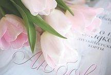 Flower, beautiful, quotes, etc..