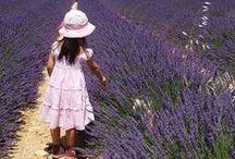 Provence, lavender..