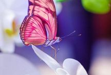 Butterfly / by Wilma