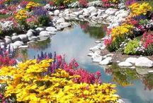 My Dream Garden / All about gardening