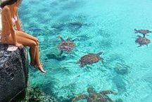 Turtles <3 <3