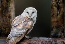 White owl ☆