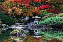 Japanese Gardens / Beautiful elements of Japanese gardens.