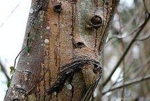 Natural Artworks / Courtesy of Mother Nature