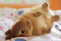Bunny <3