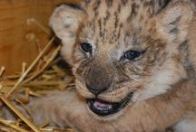 Zoo Babies! / Animal babies! / by Sacramento Zoo