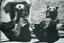Zoo History / History photos of the Sacramento Zoo / by Sacramento Zoo