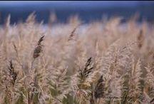 Sardeaux / http://sardeaux.blogspot.fi #dog #bordercollie #nature # blog