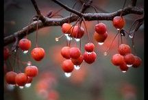 LOVE RAIN????? /   When I am silent, I have thunder hidden inside. ~Rumi