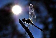 Butterflies,Lady bugs &  Dragonflies magic / Butterflies,Lady bugs &  Dragonflies magic