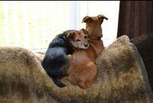 <Terrier trouble >