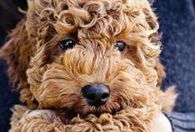 ღ Dogs ღ / I love dogs.they just melt my heart