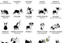 zvířata a humor