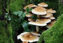 MUSHROOMS & FUNGI MAGIC!! (2) / MUSHROOMS & FUNGI MAGIC / by FAIRY HILL