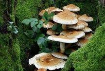 MYSTERY OF MUSHROOMS / MUSHROOMS & FUNGI MAGIC,mystery of mushrooms