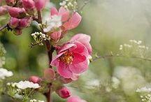 ✿⊱╮Flower Gardens•❦•:*´¨`*:•❦•❤ / ✿⊱╮ Flower Gardens•❦•:*´¨`*:•❦•❤