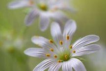 bloemen 2 / bloemen