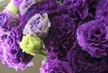 Flower lisianthus