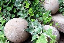 Garden Tips  / by Far Hills Florist