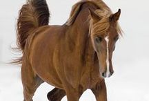 Magnificient Creatures / All about horses...