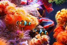 Love my aquarium / ...diversi modi di vivere il tuo acquario...