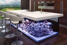 mille idee per il tuo acquario / #acquario #aquarium #verdevivo