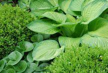 Schaduwplanten / shade plants