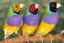 birds / animals
