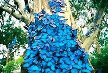 butterflies / butterflies that we like it