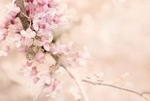 Cherry blossoms♥