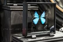 Butterfly ★ / by HIP in style