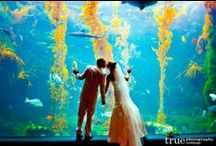 Aquarium Wedding / An aquarium is a fun venue and there is something magical about getting married next to sea life / by Dania Q
