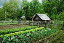 Gardening & Outdoors / by Deborah Cummins