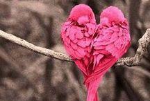 So Cute! / #Cute #Animals #CuteThings