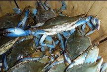 True Blue Maryland Crabs / The 'True Blue' certification program lets you know if the restaurants you love support our local economy and serve the freshest seafood available.  Look for the True Blue logo before you make a reservation! Buy Local!
