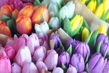 Color Palette / #Colors #ColorPalette