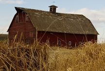 If I Had a Barn / by Chrissy Streit