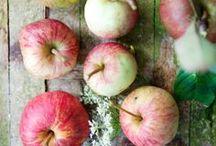 Farm Life / Seasonal produce, organic farming, organic produce, farmer's market